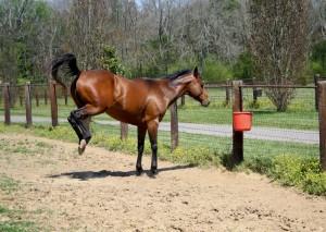 Equine Chiropractor London Equine Chiropractic