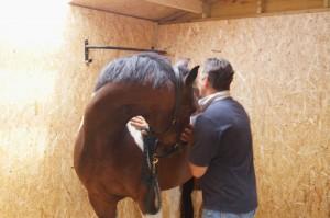 London Equine Chiropractic