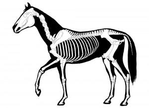 Horse Chiropractor London Equine Chiropractic