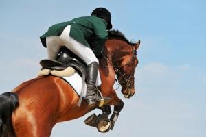 Horse Chiropractor, London Equine Chiropractic